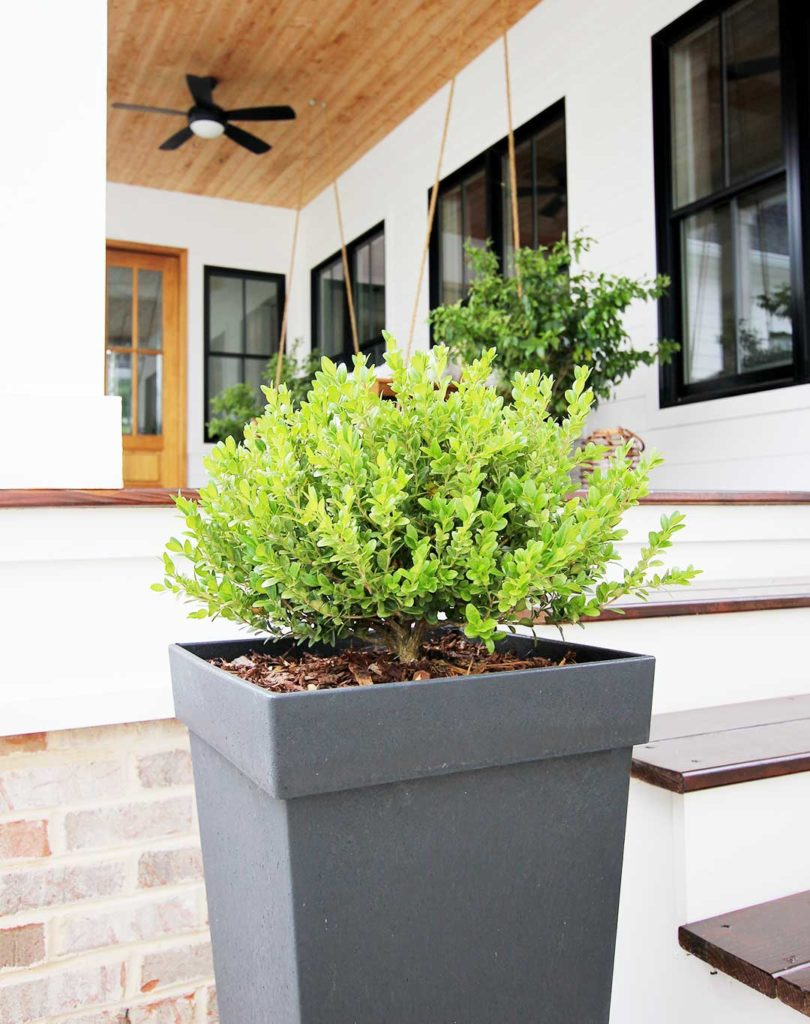 8 Best Shrubs And Trees For Containers Plank And Pillow